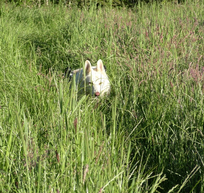 Daisy dog in the long grass