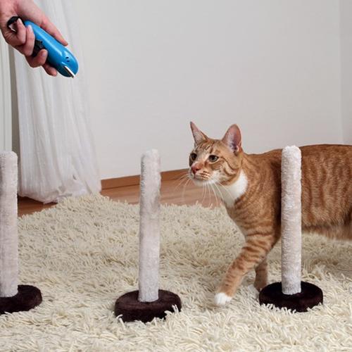 Cat agility weave poles