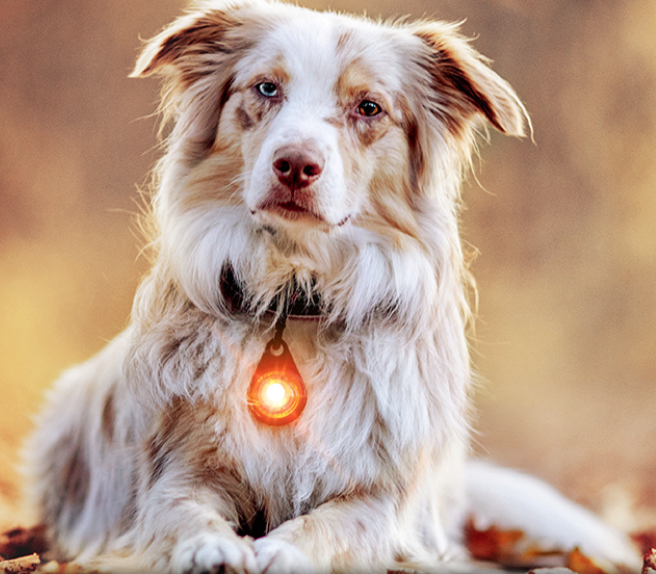 Orbiloc Dog Safety Light in Amber