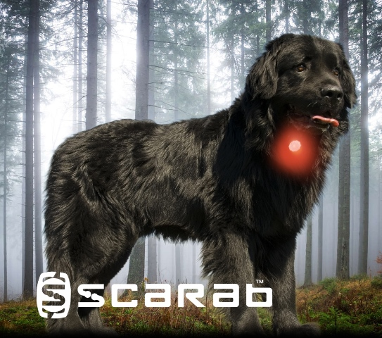 Scarab beacon dog safety light