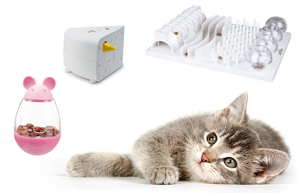 Cat Enrichment Toys