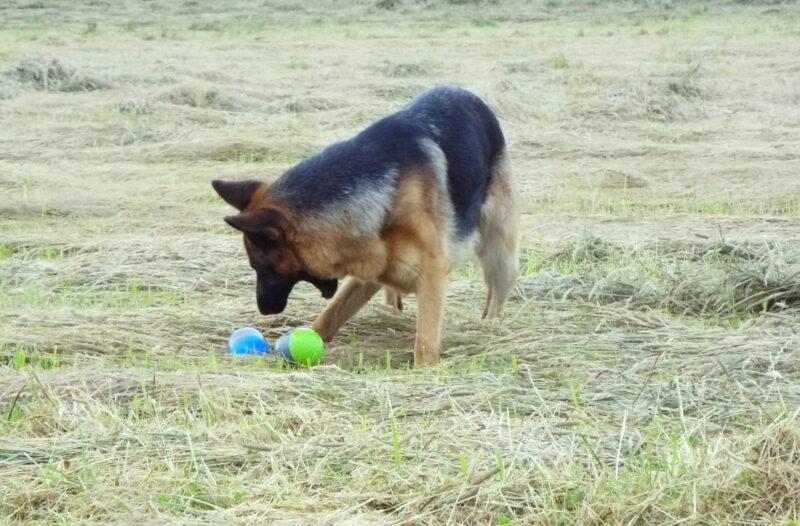 Petsafe Electronic Dog Toy Ricochet