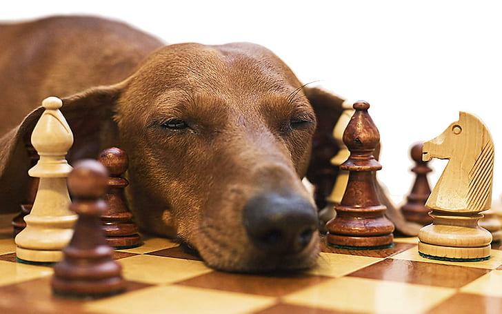 Calm Dog Games