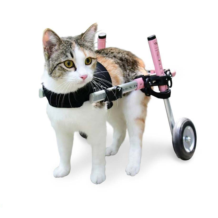 Walkin' Wheels Wheelchairs for cats