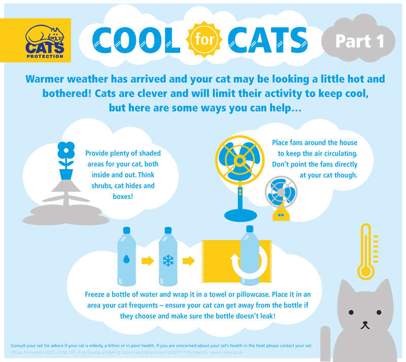 Tips for cool cats