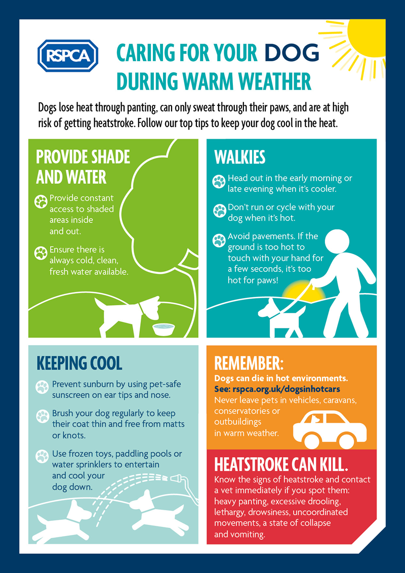 Caring for your Dog in Warm Weather