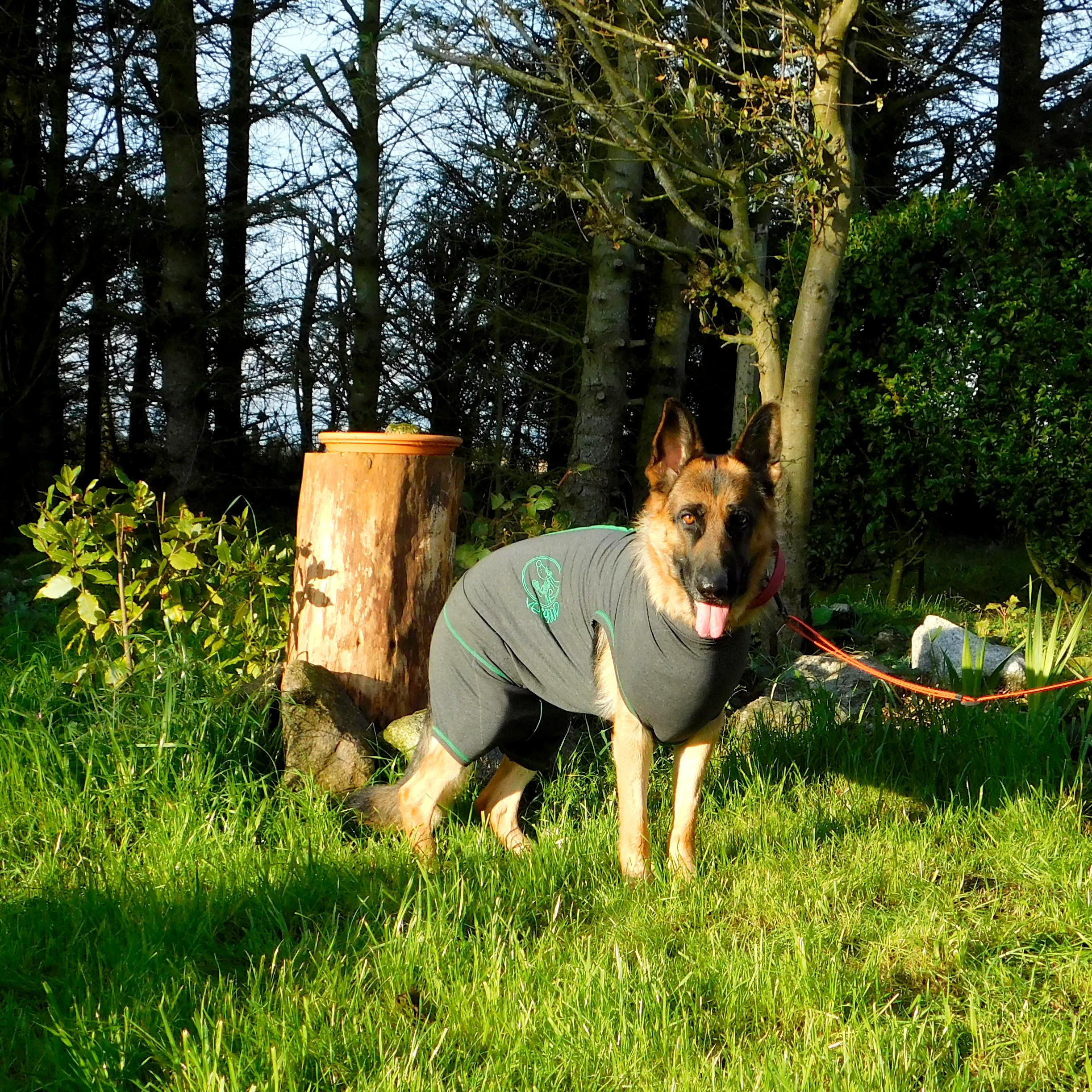 Tilly wearing her Vetgood Protective Medical Suit