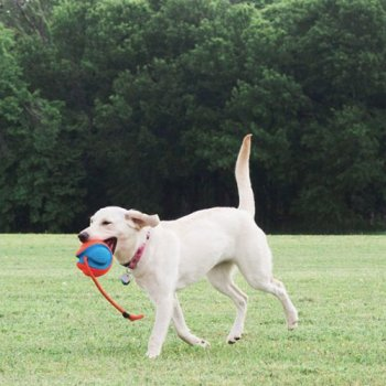 Dog's love the Chuckit! Rope Fetch Dog Toy