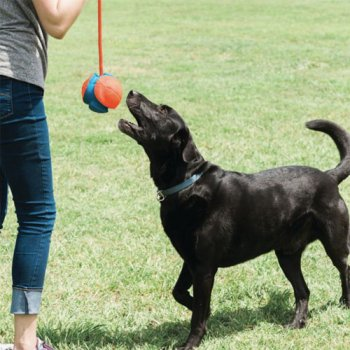 Chuckit! Rope Fetch for Dogs
