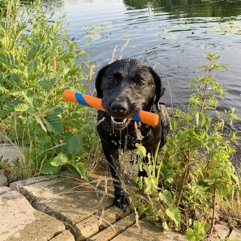 Chuckit! Fetch Stick for land or water